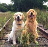 犬常见疾病:犬螨病
