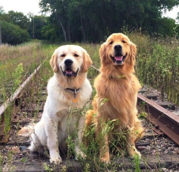 狗狗特别挑食怎么办?五妙招改掉它的臭毛病