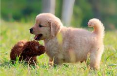 狗狗到新家后准备什么?