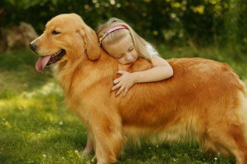 金毛犬的运动与健康